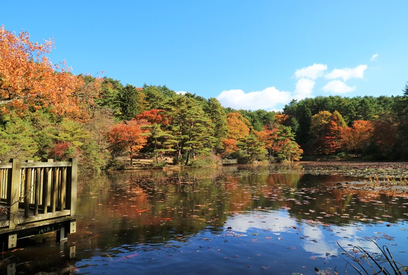 極楽寺山、蛇の池の紅葉