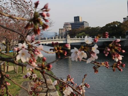 Hiroshima Peace Memorial Park SAKURA