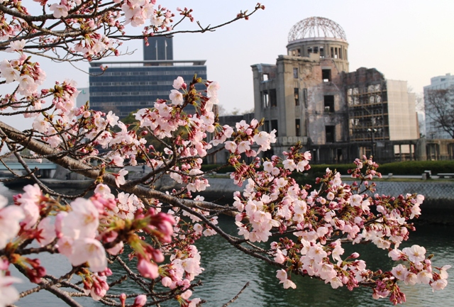 原爆ドーム 桜(Atomic bomb dome sakura)