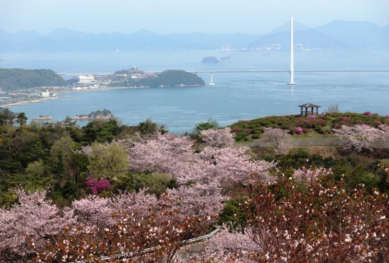 伯方島、開山「頂上展望台」桜