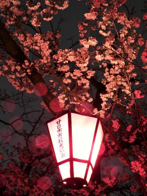 住吉堤防敷のライトアップ(雪洞)