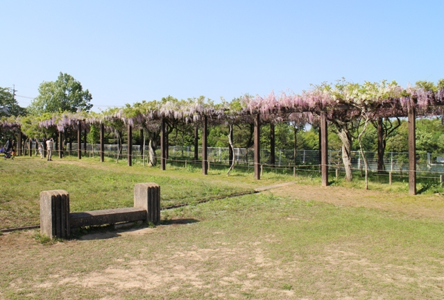 三永水源地の藤棚