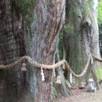 樹齢3000年!日本一の「杉の大杉」は驚愕の大きさ!(高知県大豊町)