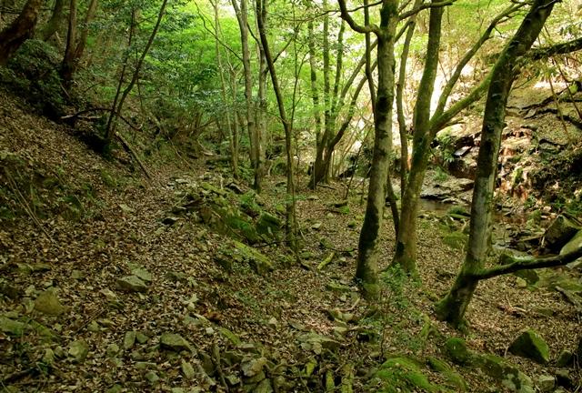 石采の滝へ向かう道のり