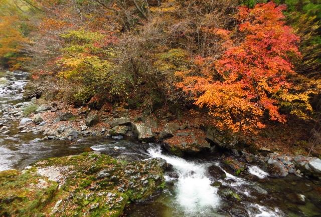 中津谷渓谷の紅葉
