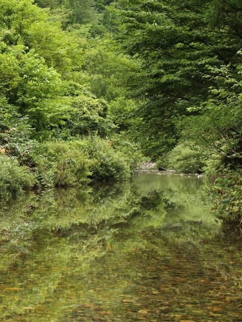 中津谷渓谷、水面に写る木々