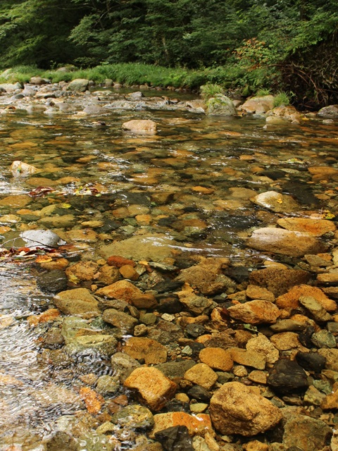 中津谷渓谷、川の水は透明度が高い