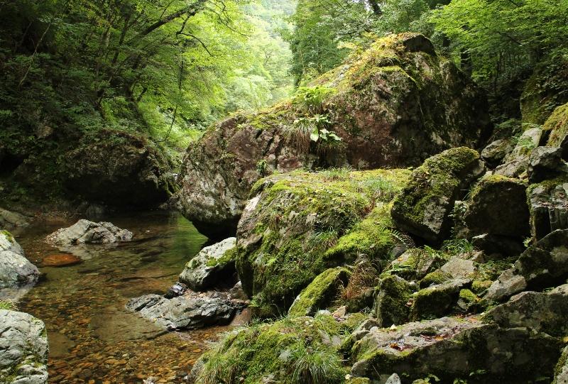 中津谷渓谷、苔の生した巨石