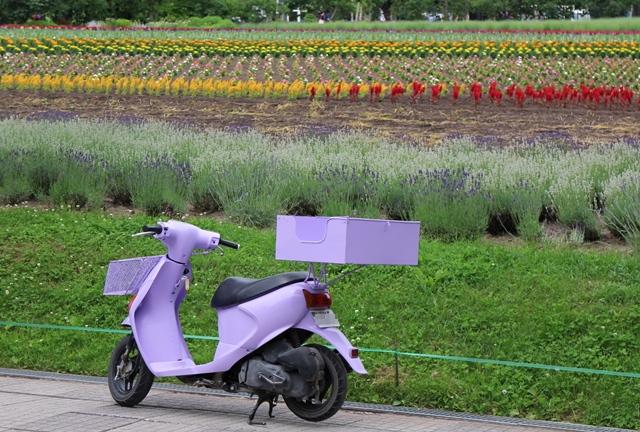 ファーム富田、ラベンダー色のスクーター