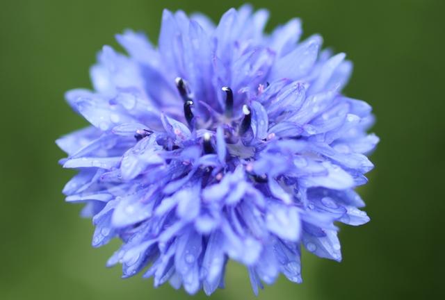 上野ファームの花