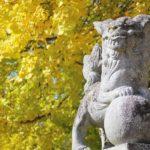 筒賀の大銀杏、天を突く巨木が黄色く染まる!!(安芸太田町筒賀)