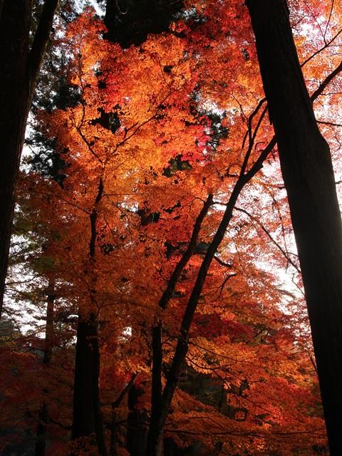 佛通寺の夕暮れの紅葉