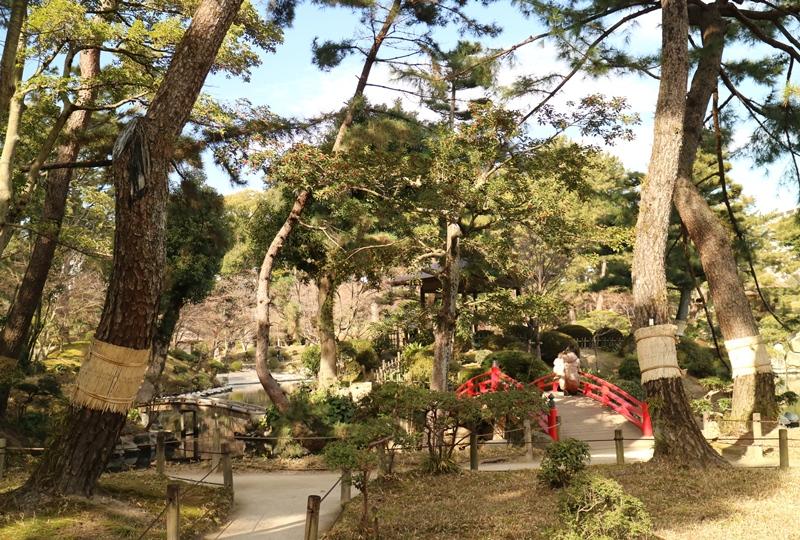 縮景園の背の高い松