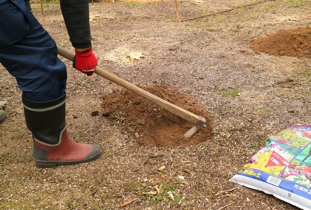 鍬を地面に打ち込んで土を柔らかくする
