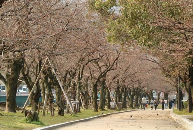 平和公園の桜並木