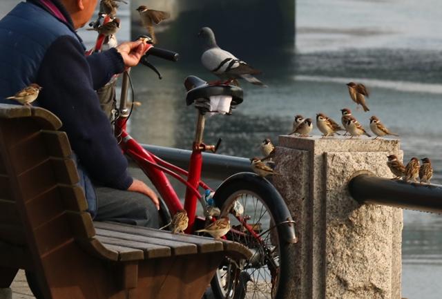 平和公園でスズメやハトに餌をあげる人