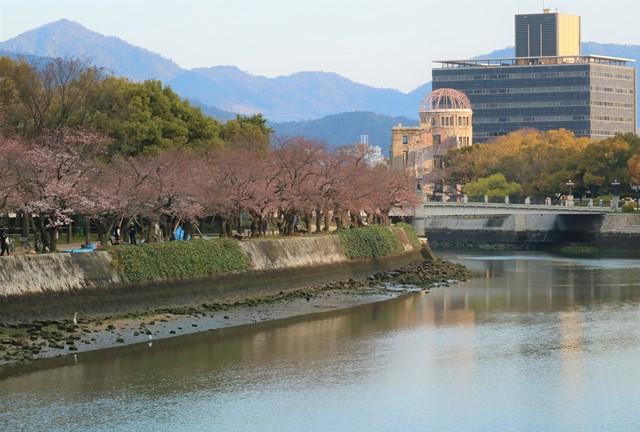 広島平和記念公園の桜開花状況