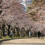 広島【平和記念公園】桜開花情報2017随時更新じゃ!