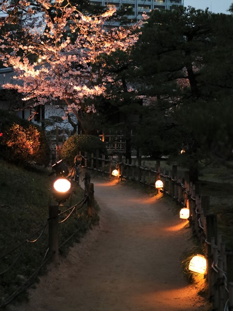 縮景園「夜桜特別開園」