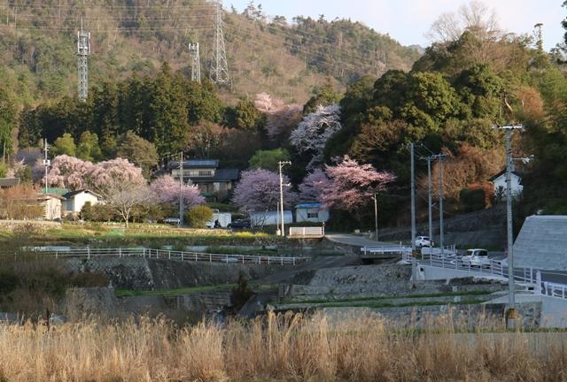 神原のしだれ桜付近の様子