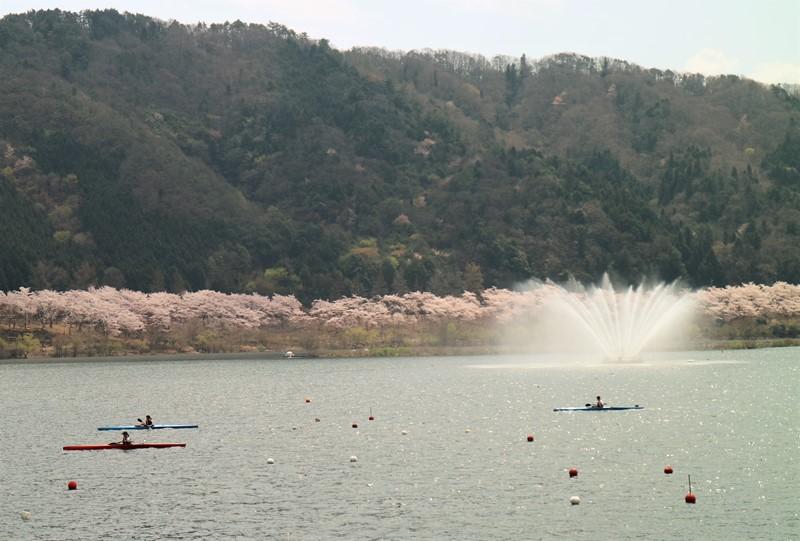 土師ダムの桜と八千代湖