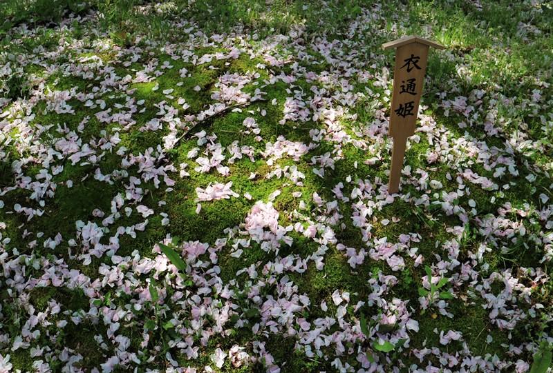広島造幣局「花のまわりみち」八重桜