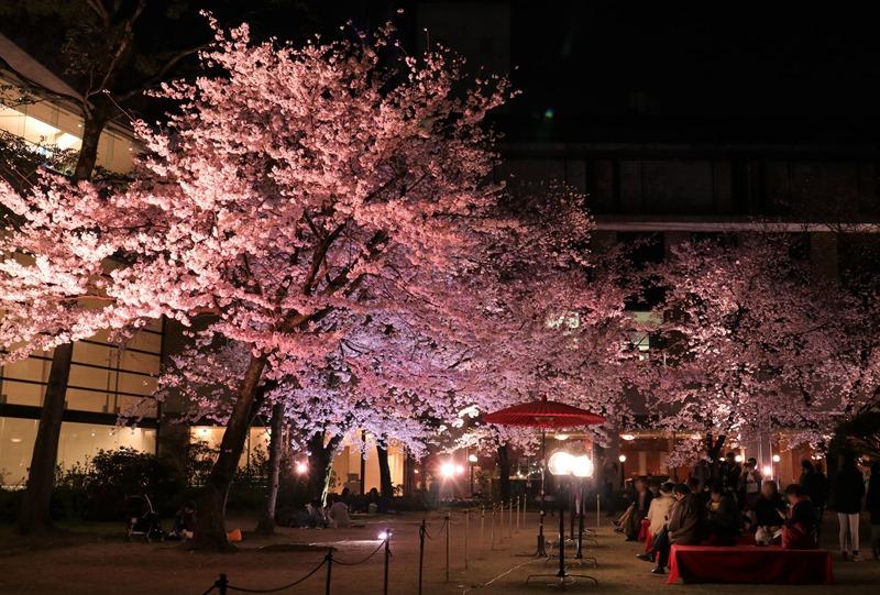 縮景園「夜桜特別開園」にわかふぇ