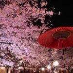 縮景園「夜桜特別開園」ライトアップで桜が一段と華やかに!