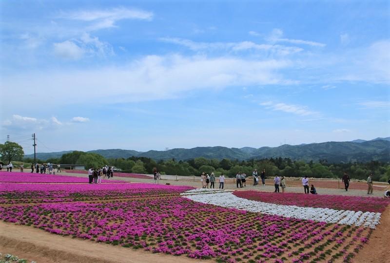花夢の里、芝桜の丘