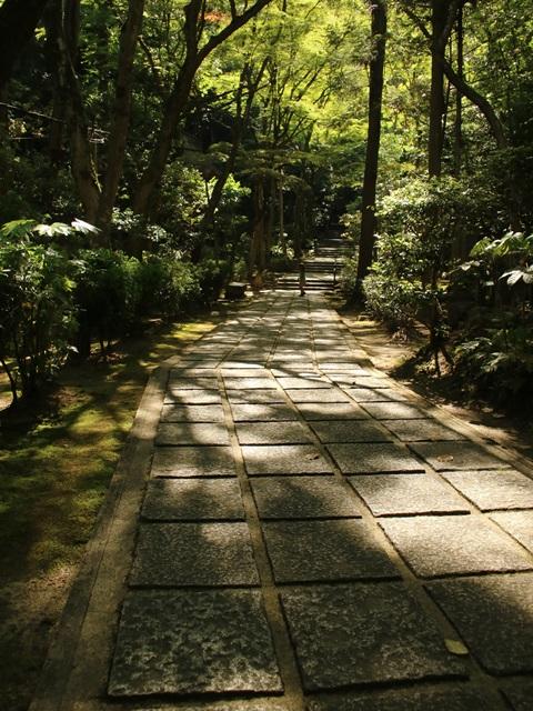 新緑に覆われた三滝寺