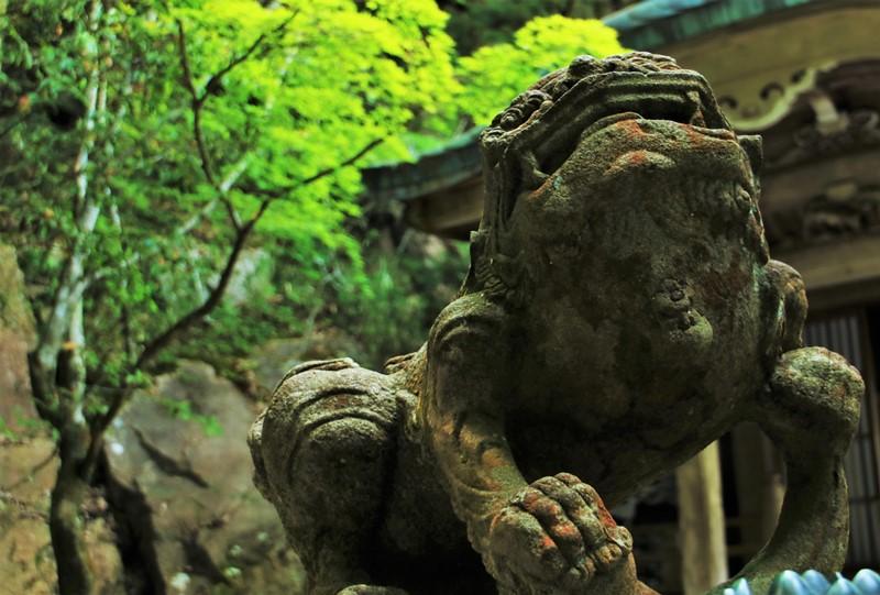 三滝寺、新緑と狛犬