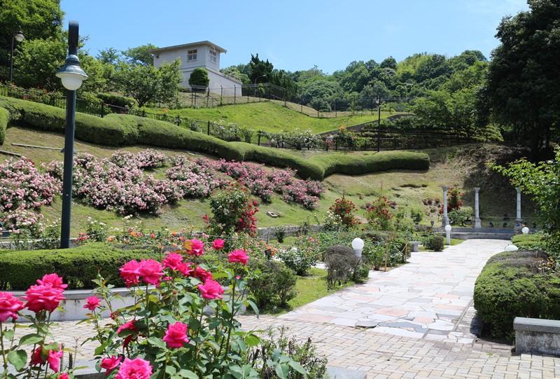 牛田総合公園『バラ園』