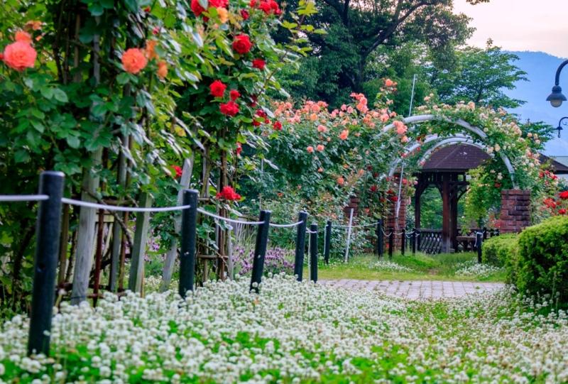 広島市東区、牛田総合公園のバラ園