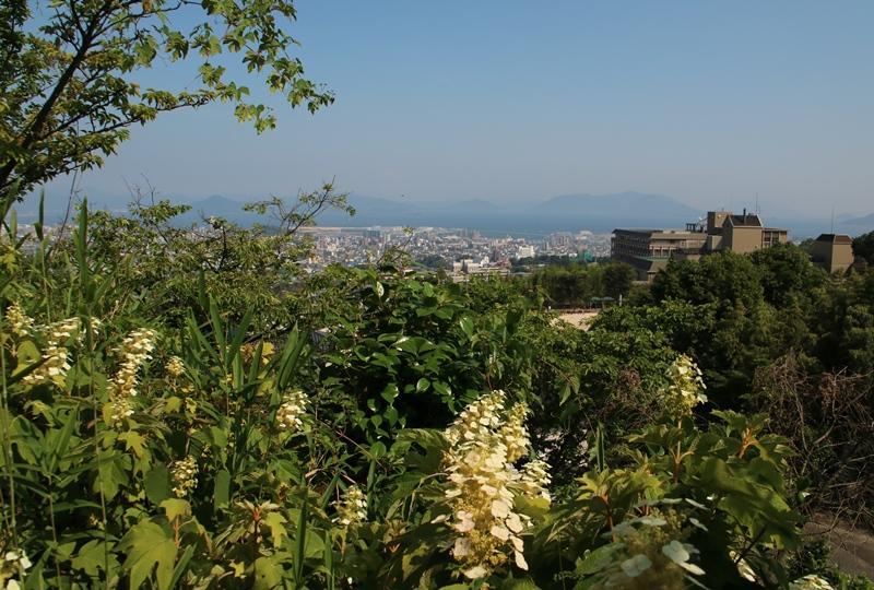 観音寺、アジサイの植えられた本堂の北東の丘からの展望