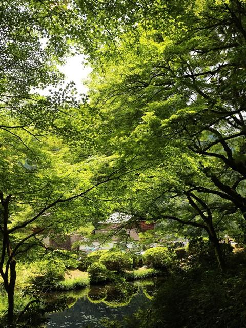 新緑の吉水園