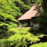 モリアオガエルの住む『吉水園』、新緑に囲まれて(安芸太田町加計)