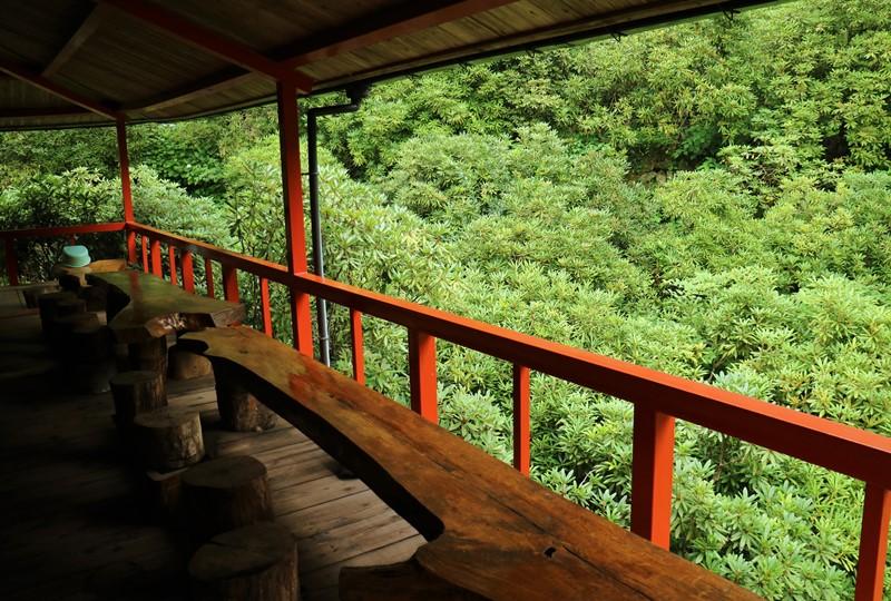 右平「花園の里」山小屋の外のシャクナゲ