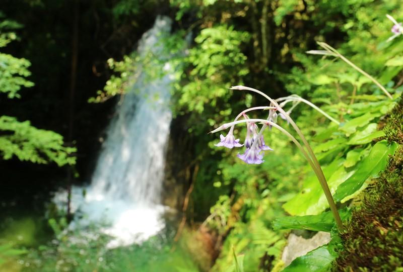 町道打梨那須線から見える「那須の滝」
