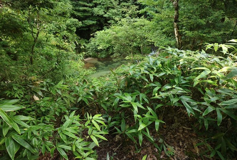岩井谷の大龍頭、遡行への入口