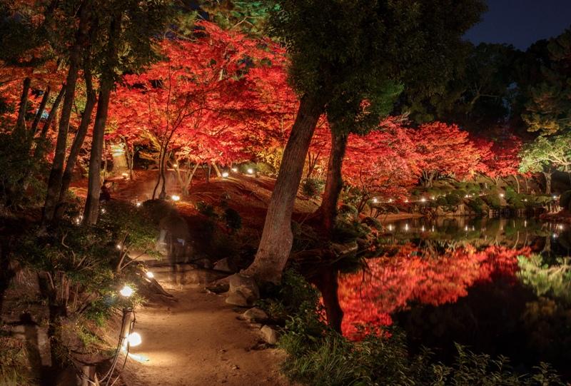 縮景園、紅葉ライトアップ