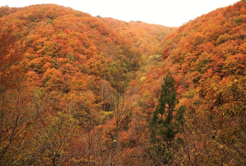 水梨口駐車場へと続く林道からの紅葉した山々