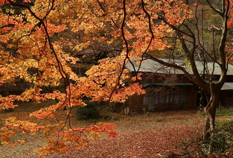 三段峡、葭ヶ原(よしがはら)付近の紅葉