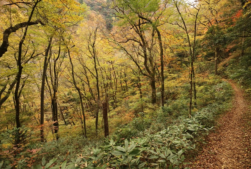 三段峡、三段滝へと向かう遊歩道