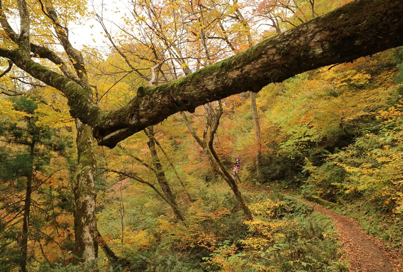 三段峡、三段滝からの帰路