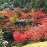『三景園』もみじ谷が燃えるような紅葉に包まれていた!!(三原市本郷町)