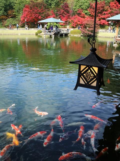 三景園の立派な鯉