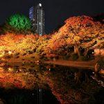 『縮景園』紅葉ライトアップ!水面に浮かぶ鏡像の世界へ!!
