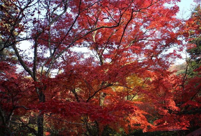 宮島、紅葉谷公園