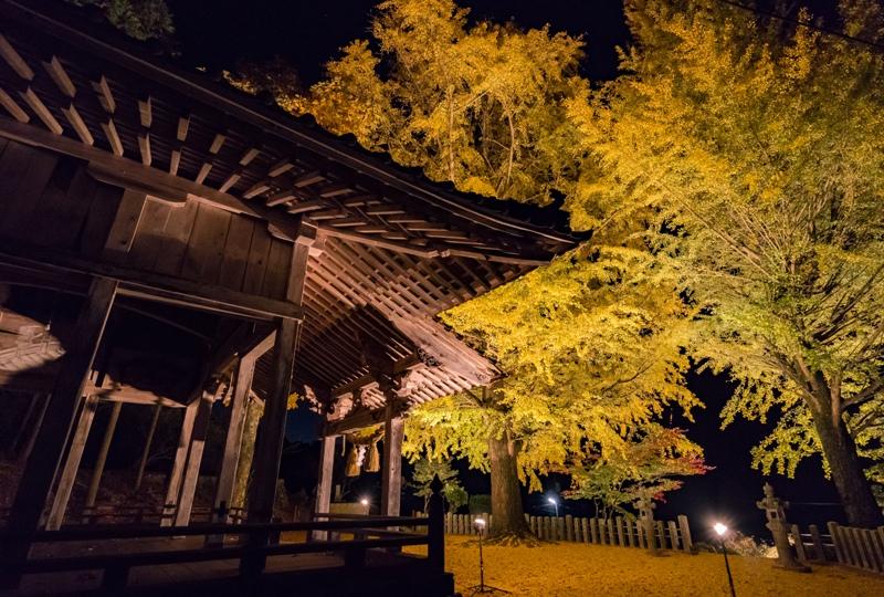 客人神社、銀杏のライトアップ(佐伯区湯来町)