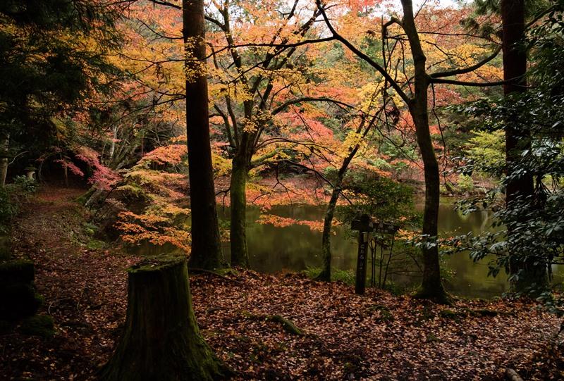 金亀池の紅葉